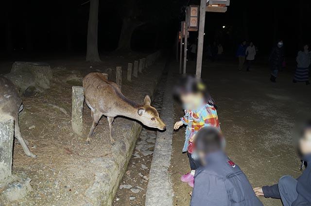 鹿が普通にでてきます